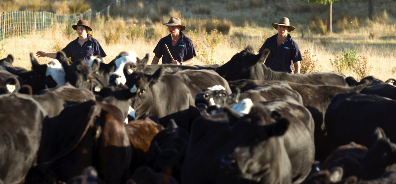 Better Beef Breeding Workshops 2017: bull buying for the commercial beef breeder